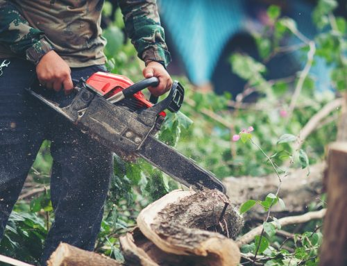 Autorização e responsabilidades para a poda de árvores